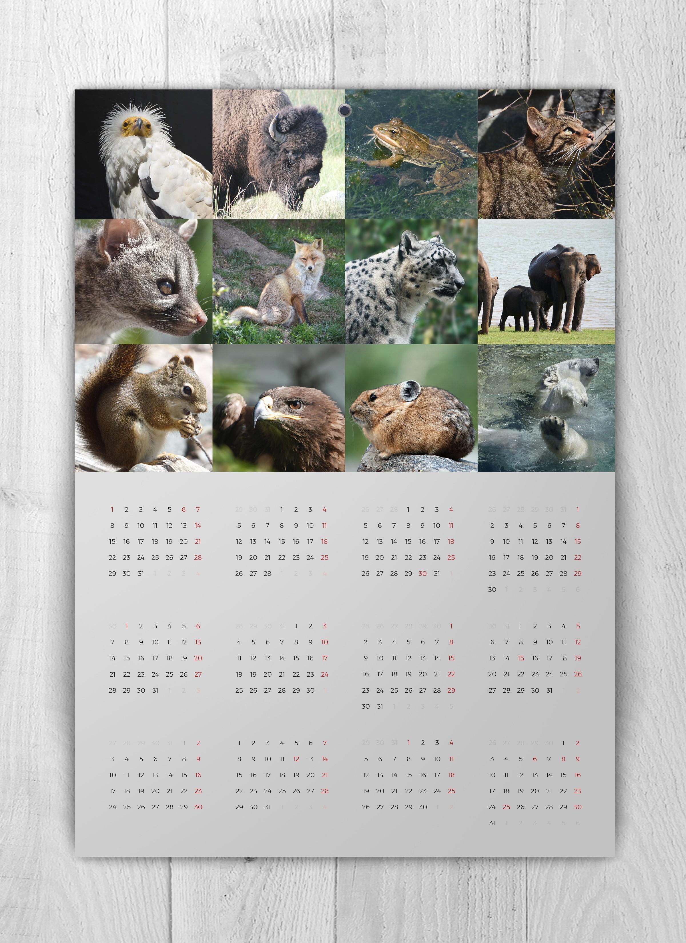 Hoja anual del calendario solidario